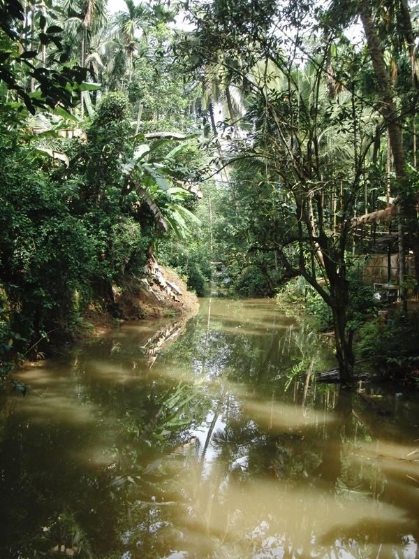 tropischer Dschungel in dem die Gewuerze wachsen