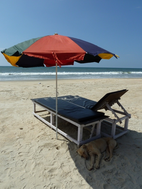 unser Liegennachbar... :) , Varca Beach (Goa)