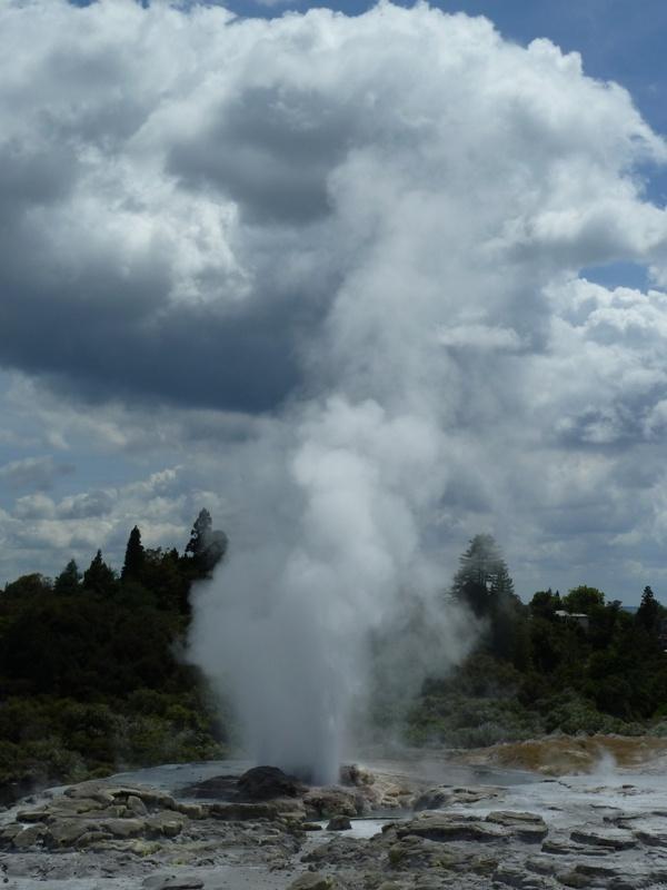 "Geysire bei ""Te Puia"", Rotorua"