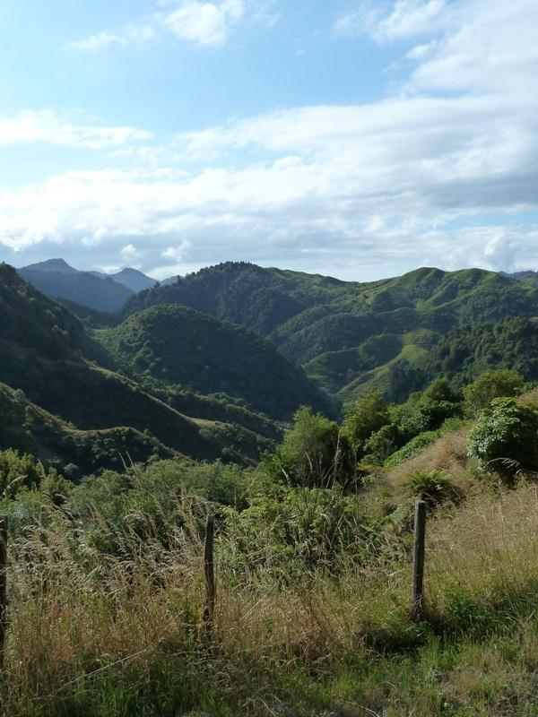 Fahrt von Whakatane bis Gisborne, eine tolle Landschaft! (kommt am Foto bei Weitem nicht...)