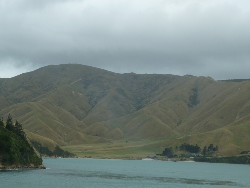 "Faehr-Fahrt nach Picton (Suedinsel) durch die ""Marlborough Sounds"""
