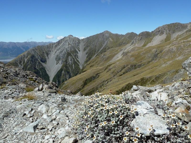 ...auch der Abstieg war beeindruckend - ueberall TEPPICHE von Edelweiss!