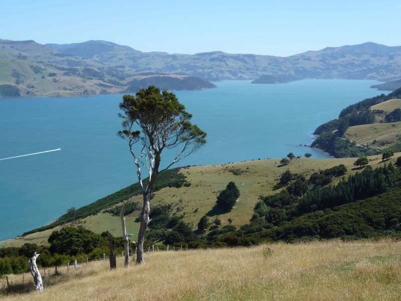"Walk zum ""Nikau Palm Gully Reserve"", Banks Peninsula"