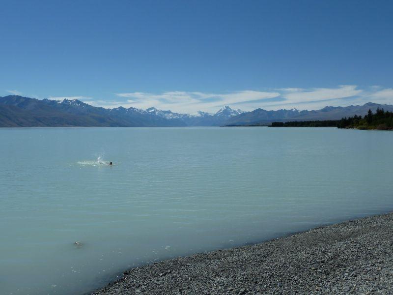 ...zumindest einer hat sich ins kalte Wasser getraut *gg*, Lake Pukaki