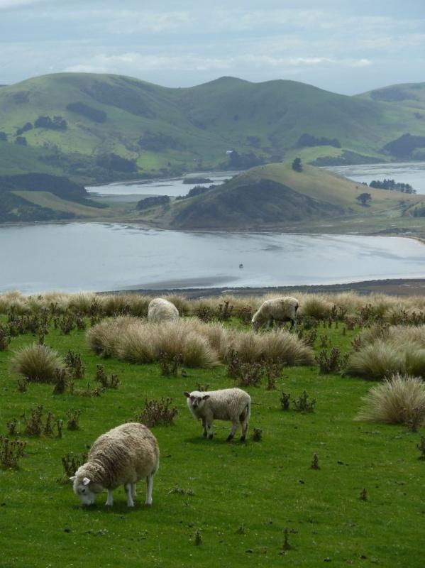"""kurzer Rundwanderweg """"Lovers Leap"""", Otago Peninsula"""