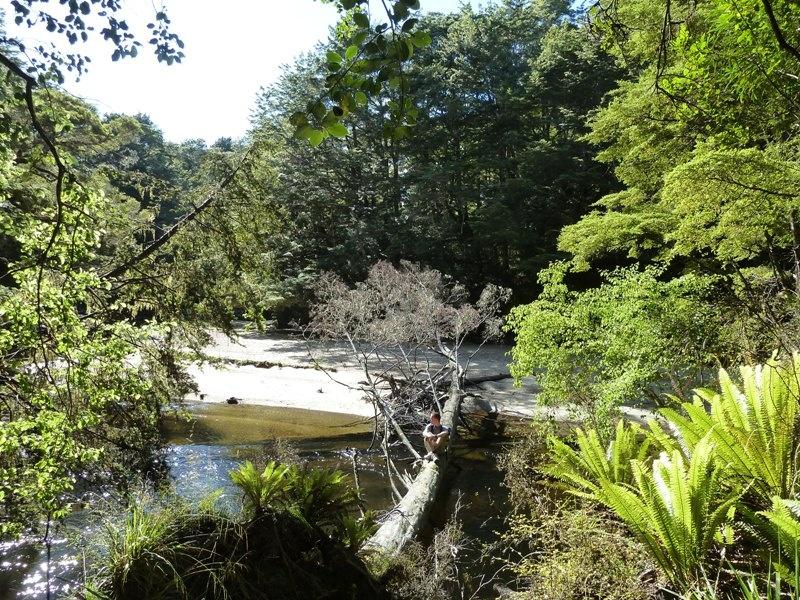 7h-Rundwanderweg zur Hope Arm Hut und Back Valley Hut (bei Manapouri)