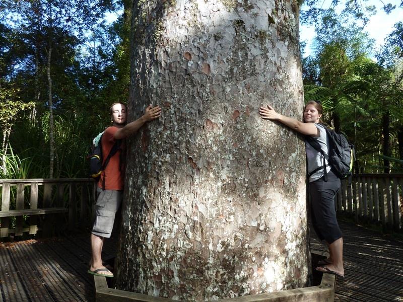 big Kauri-hug